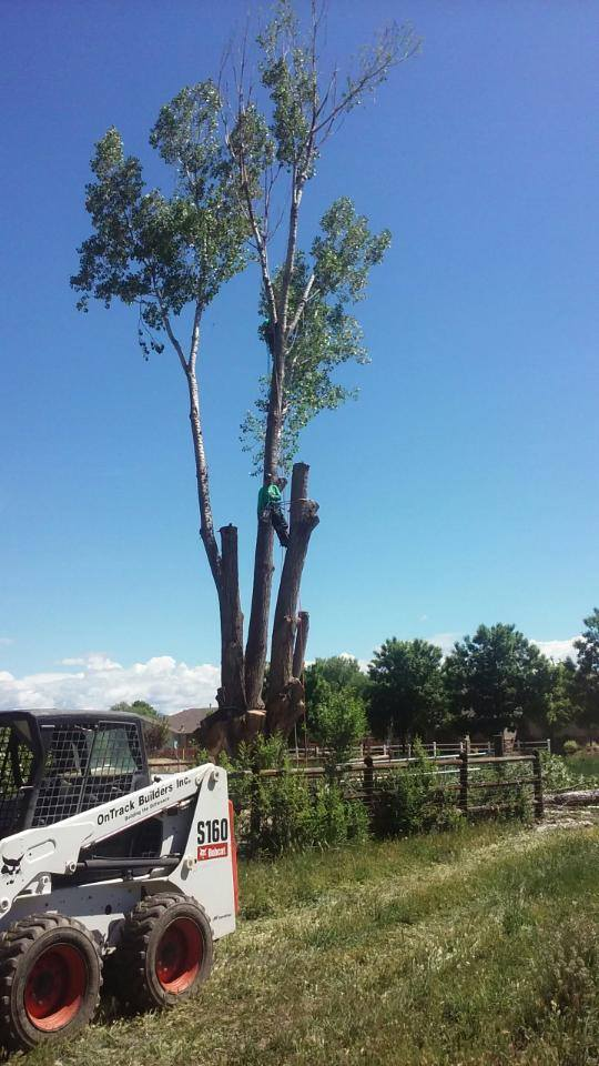Cottonwood Tree Removal in Grand Junction, Colorado