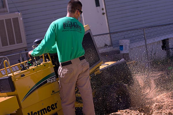 Stump Removal Grand Junction