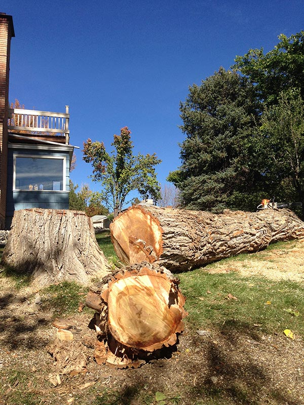 Tree Removal Grand Junction